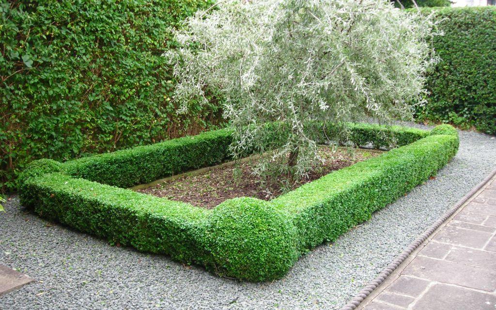 Garden Gallery Ideal Gardens Design Consultancy